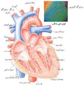 حفرات قلب